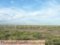 Santiago del Estero en Pinto: Campo Agrícola 1000 hectáreas Siembra Directa