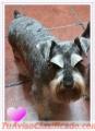 Peluquería canina a domicilio,en CABA. Baños y cortes de razas.