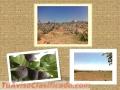 Magnifica Huerta de Higos Terreno $350 por m2