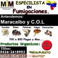 Servicios de fumigacion en maracaibo y c.o.l