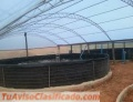 FISH BREEDING TANKS/ TANQUES PARA CRIA DE PECES /CAMARONES