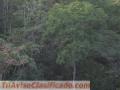 SE VENDEN PREDIOS EN SAN VICENTE DEL CAGUAN CAQUETA