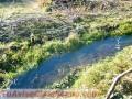 parcela-de-11-hectareas-con-casaagualuz-galpon-arboles-nativos-4.JPG