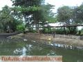 Finca En Espinal Piscícola y porcícola magnifica casa 6 lagos  cerca a Vía principal