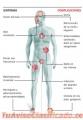 tratamiento-de-enfermedades-graves-con-terapia-celular-multiembrionaria-2.jpg