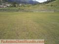 Grama natural pasto bermuda grass colombia