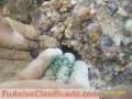 Hidrosiembra siembra manual dirigida colombia