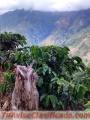 Notre Café 100% Naturale Colombien