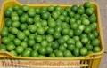 se-vende-limon-tahiti-o-persa-4.jpg