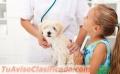 Tratamiento Garrapaticida para sus Mascotas
