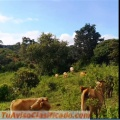 Se vende hermosa finca de  24 hectáreas,para zona avícola o ganadera