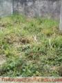 Venta de terrenos en pueblo nuevo san cristobal estado tachira