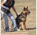 "Libro ""adiestramiento Canino Fácil"""