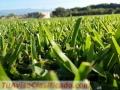 venta-de-pasto-para-canchas-de-futbol-jardines-areas-verdes-1.jpg