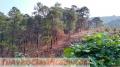 Terreno de 16.6 Ha con bosque y río cerca de Donato Guerra