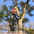 Fernando Tree Services