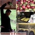 Conoce Asturias. Paraíso Natural. Excelente Gastronomía y Sidra.