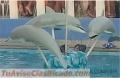delfines-palmeras-y-muchos-mas-en-gran-oferta-5.jpg