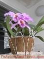 Orquídeas cultivadas en casa