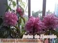 plantas-y-semillas-de-flores-de-san-juan-7372-4.jpg
