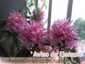 plantas-y-semillas-de-flores-de-san-juan-9349-1.jpg