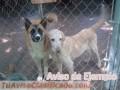 adopta-tu-mascota-8934-3.jpg