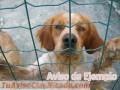 adopta-tu-mascota-9791-1.jpg