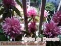 plantas-y-semillas-de-flores-de-san-juan-6626-3.jpg