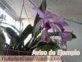 orquideas-cultivadas-en-casa-3178-1.jpg