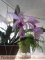 orquideas-cultivadas-en-casa-4.jpg