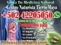 Medicina Natural de Alta Calida Con el Naturopata Tomas Ikal de Guatemala 011 502 42205050