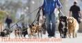 Paseos para perros en manada, paseador de perros zona Buceo, Parque Batlle, Villa Dolores