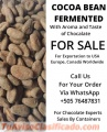Cocoa Beans Fermented For Wholesale