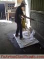 Servicio de Fumigación para Comején y Ratas