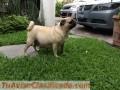 lindos-cachorritos-2.JPG