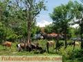 Finca de 2,500 tareas en Monte Plata