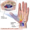 apiterapia-3.jpg