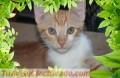 S.O.S: MUY URGENTE: Naco en Adopción :: Gatito en adopción
