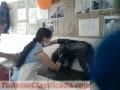 escuela-nacional-de-peluqueria-canina-aprofac-3.jpg