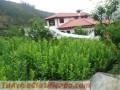 plantas-forestales-1.jpg