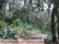 vendo-terreno-de-8-hectareas-en-atyra-paraguay-2.jpg