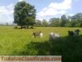 Finca de 40 hectáreas a 2 horas de San José (Bataan)