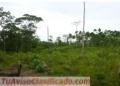 Finca de 111 hectáreas – San Carlos - Coopevega