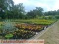 vivero-y-proyectos-de-jardineria-y-ornatos-1.jpg