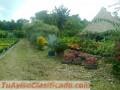 vivero-y-proyectos-de-jardineria-y-ornatos-2.jpg