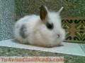 hermosos-conejos-2.jpg