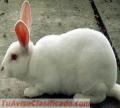 hermosos-conejos-3.png