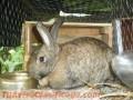 hermosos-conejos-4.JPG
