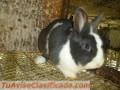 Venta de conejos al  3134472587