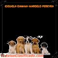marcelo-pereyra-escuela-canina-1.png